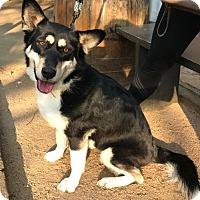 Adopt A Pet :: Helen - Dallas, TX