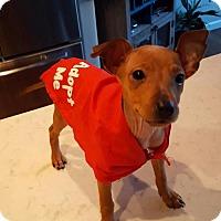 Adopt A Pet :: Hope - Sacramento, CA