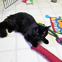 Adopt A Pet :: Magic - Burgaw, NC