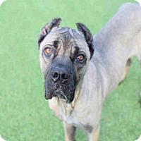 Adopt A Pet :: MARSHMELLOW - Atlanta, GA