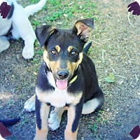 Adopt A Pet :: JASMINE - Princess Puppy! - Chandler, AZ