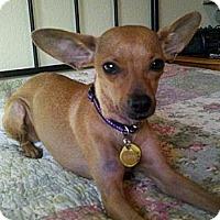 Adopt A Pet :: Jezebel - AWESOME family dog! - Seattle, WA