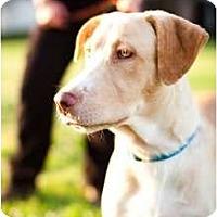 Adopt A Pet :: LEILA - Houston, TX