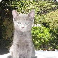Adopt A Pet :: Sophie - Los Angeles, CA