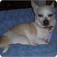 Adopt A Pet :: Riley - Rigaud, QC