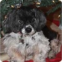Adopt A Pet :: Lila - Sugarland, TX