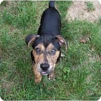 Adopt A Pet :: Stone - In Monroe, CT! - Adamsville, TN