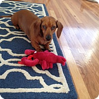 Adopt A Pet :: Sophie - Louisville, CO