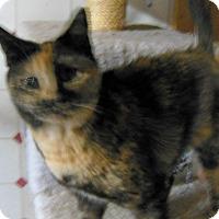 Adopt A Pet :: Calipsi - Sanford, ME