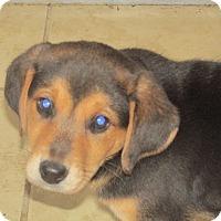 Adopt A Pet :: Poe - Franklin, VA