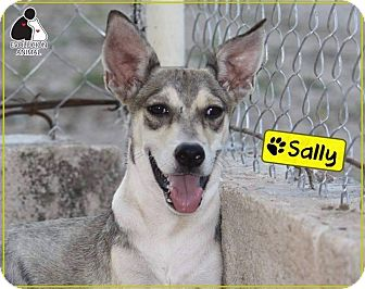 Terrier (Unknown Type, Medium)/Carolina Dog Mix Dog for adoption in St. Catharines, Ontario - Sally