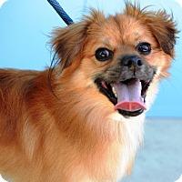 Adopt A Pet :: Bentley - Poplarville,, MS