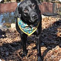 Adopt A Pet :: Snoop - East Randolph, VT