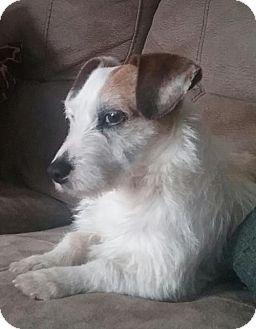 Adopt A Pet :: LA-Milo (DOG)  - Devon, PA