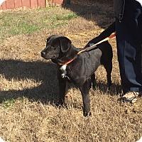 Adopt A Pet :: River - Plainfield, CT