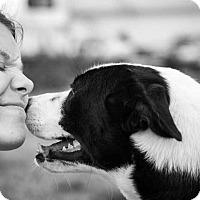 Adopt A Pet :: RANGER - Summerville, SC