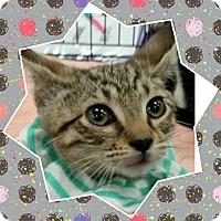 Adopt A Pet :: Percy - Staten Island, NY