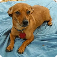Adopt A Pet :: Figgy - Wallis, TX