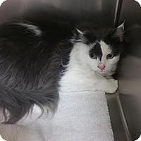 Adopt A Pet :: Boomer - Chippewa Falls, WI
