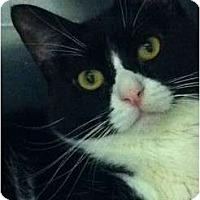 Adopt A Pet :: Penelope - Pittstown, NJ
