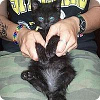 Adopt A Pet :: Ninja - Grand Rapids, MI