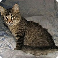 Adopt A Pet :: Homer - Norwich, NY