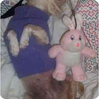 Adopt A Pet :: Maxie - Mays Landing, NJ