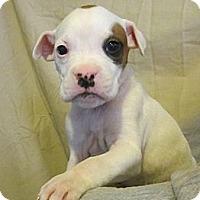 Adopt A Pet :: Doc - Medora, IN