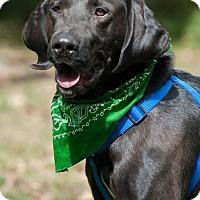 Adopt A Pet :: Mac - Lewisville, IN