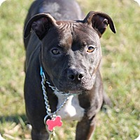 Adopt A Pet :: Serrano Pepper - Salem, OR