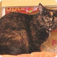 Adopt A Pet :: Willa - Colmar, PA