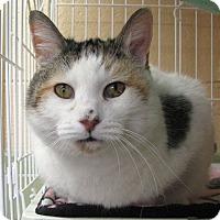 Adopt A Pet :: Dutchess - Albuquerque, NM