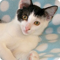 Adopt A Pet :: Patch - Union, KY