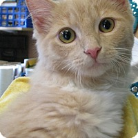 Adopt A Pet :: Sundance - New Kensington, PA