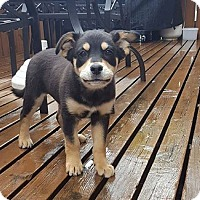 Adopt A Pet :: TORI - Winnipeg, MB
