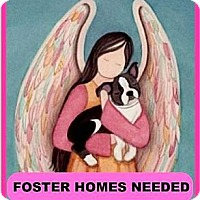 Adopt A Pet :: FOSTER HOMES NEEDED - North Augusta, SC