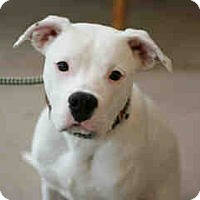 Adopt A Pet :: Xanny - Only $105 adoption! - Litchfield Park, AZ