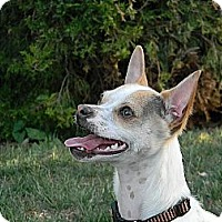 Adopt A Pet :: Toby - Fort Collins, CO