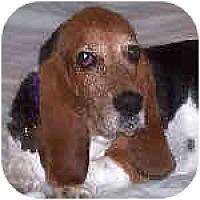Adopt A Pet :: Savannah - Phoenix, AZ