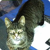 Adopt A Pet :: Lucky - Rochester, NY