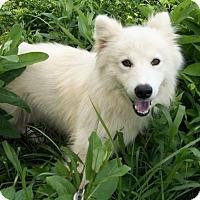 Adopt A Pet :: Ben or Jerry - Augusta County, VA