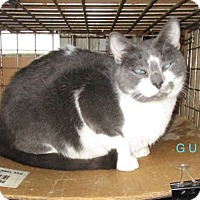 Adopt A Pet :: GUY - detroit, MI