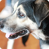 Adopt A Pet :: Brandy - West Chester, PA