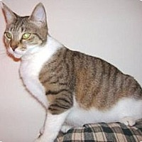 Adopt A Pet :: Holly - Miami, FL