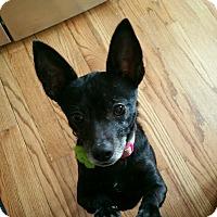 Adopt A Pet :: Fiona - Waldorf, MD