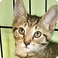 Adopt A Pet :: Devina - Island Park, NY