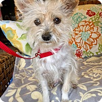 Adopt A Pet :: Ophelia - Santa Ana, CA