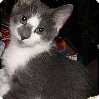 Adopt A Pet :: Logan - Catasauqua, PA