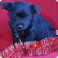 Adopt A Pet :: NICHOLAS - Torrance, CA