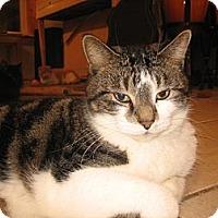 Adopt A Pet :: Maxim - Portland, ME